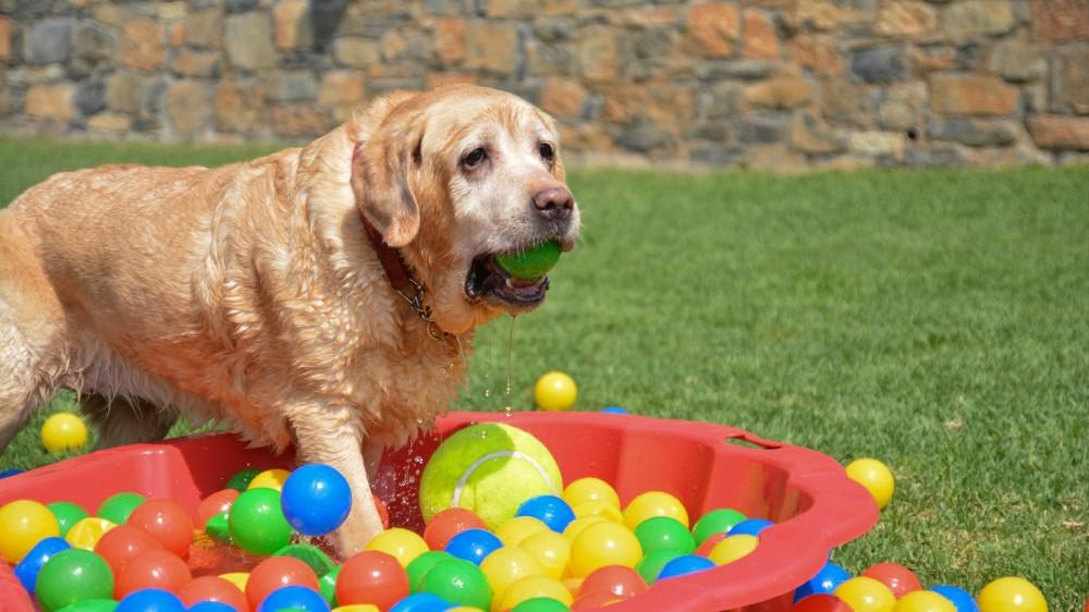 Εκτροφείο, ξενώνας και εκπαιδευτήριο σκύλων Kreta Rex House