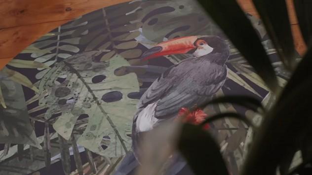 Toucan, ένα ταξίδι στην ζούγκλα