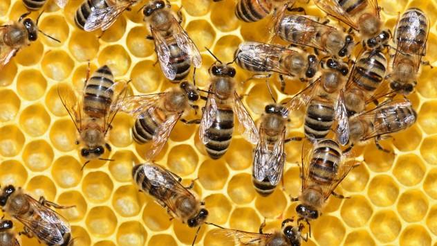 Ο σύμμαχος του μελισσοκόμου στο διαδίκτυο